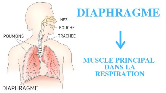exercices de respiration diaphragme