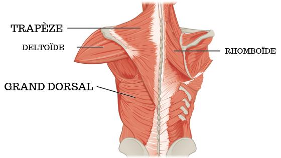 mal au milieu du dos muscles