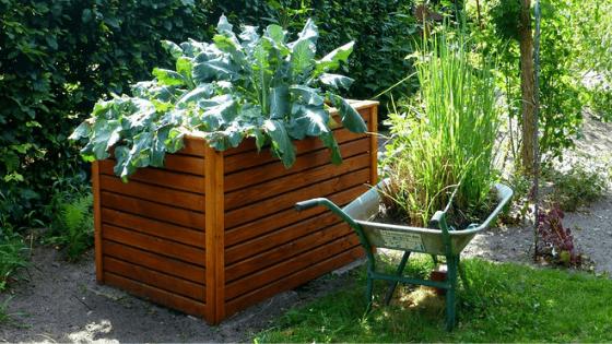 jardiner sans se faire mal au dos potager