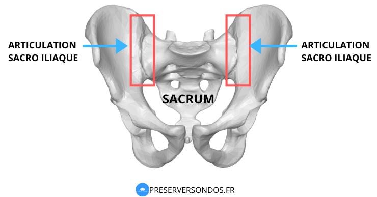 articulation sacro iliaque